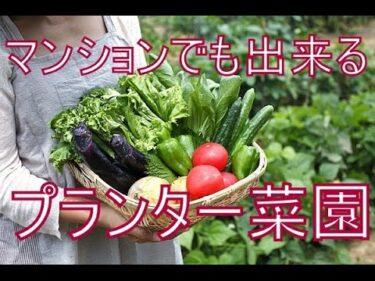 家庭菜園の種類